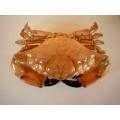 Naturalny krab